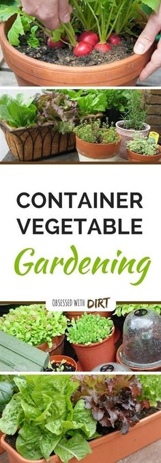 Container vegetable gardens can have higher yields than your average vegetable garden. That's because the soil is warms up faster aboveground. Find out more... #VegetableGarden