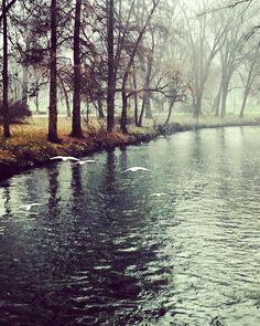 Nature #runningtime #runners #parcolambro #river #milanodavedere #milanonascosta #ig_milan #italy by romina_riccitelli