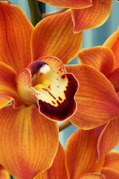 Orange Orchids..so stunning & long-lasting ( up to 3 months )  .Every nursery in Singapore sells these .