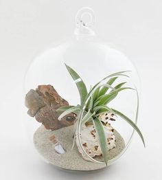 There's a new etsy listing up! #messageinabottle globe kit. You can put a tiny message in a tiny corked bottle. #plantilly #airplant #tillandsia