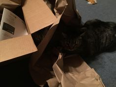 Christmas loves boxes and paper