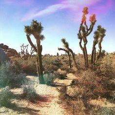 bandaidpennylane:  #desert #cactus #cacti #Bohemian