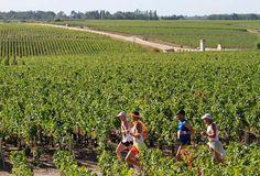 Le Marathon du Medoc... perhaps our next international marathon?
