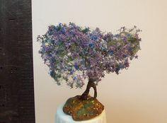 1000 images about jacaranda mimosifolia bonsai tree on. Black Bedroom Furniture Sets. Home Design Ideas