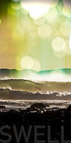 Swell. The best online surf shop.