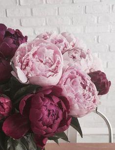 bouquet of flowers, fresh flowers, peonies Peony Rose, Peony Flower, My Flower, Fresh Flowers, Beautiful Flowers, Unique Flowers, Cut Flowers, Pretty Roses, Spring Flowers