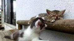 Один котенок будит второго