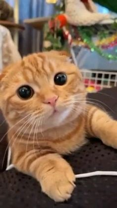 Human best friend (cat), are you agree? #cat #cutecat #pet Happy Kitten, Kitten Gif, Cute Cat Gif, Cute Cats, Funny Animals, Cute Animals, Cat Video, Happy Smile, Kittens Cutest