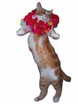 Dancing Hawaiian Cat
