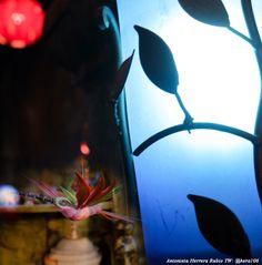 Foto tomada en Hoja seca de San Miguel de Allende Por: Antonieta Herrera Rubio #Fotos #Arte #SanMigueldeAllende #TonyRubio
