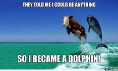 Cow Became A Dolphin by - A Member of the Internet's Largest Humor Community Dolphin Memes, Funny Dolphin, Cute Cows, Work Memes, Dolphins, The Funny, Dankest Memes, Bff, How To Become