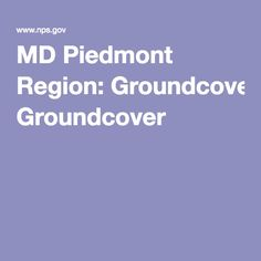 MD Piedmont Region: Groundcover Piedmont Region, Howard County, Native Plants, Landscape Design, Gardening, Landscape Designs, Garten, Lawn And Garden, Garden