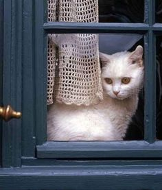 white cat in blue window | http://inspirationlane.tumblr.com