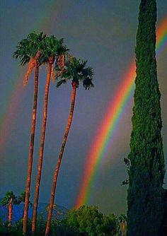 Beautiful rainbow amongst the palm trees, Monsoon season --- Tucson, Arizona. Rainbow Sky, Love Rainbow, Over The Rainbow, Cool Pictures, Cool Photos, Beautiful Pictures, Beautiful World, Beautiful Places, Jolie Photo