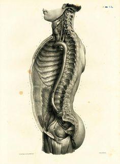 Medical Drawings, Medical Art, Human Anatomy Art, Anatomy Drawing, Illustrations Médicales, Flower Anatomy, Biology Art, Historia Natural, Medical Illustration