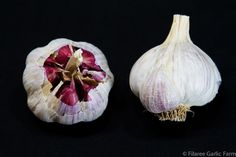 SPANISH BENITEE has nice coloration and often produces bulbs with larger cloves than other creoles. From Andalusia district of Spain. Garlic Farm, Planting Garlic, Garlic Seeds, Perennial Bulbs, Homestead Gardens, Garlic Bulb, Organic Seeds, Andalusia, Onions