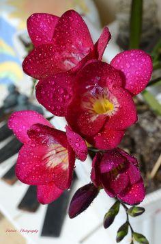 Plants, Calla Lilies, Flowers, Majorca, Plant, Planets