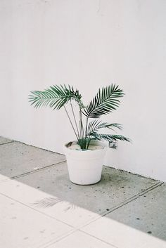 White Noise colour inspo. #woolandthegang #summer plant, greenery, decor, minimal