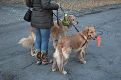 MyDogLikes recently tested out The Fifth Paw-Leash Attachment! Read on to see what we thought! www.thefifthpaw.com