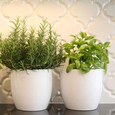 beveled Arabesque tile - like this one too for my backsplash Herb Garden In Kitchen, Kitchen Herbs, Herbs Garden, Kitchen Ideas, Kitchen Vignettes, Succulents Garden, Kitchen Inspiration, Hydroponic Gardening, Gardening Tips