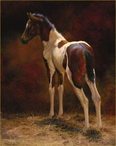 Pinto foal - horse painting by Bonnie Marris
