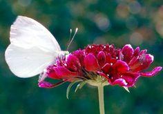Borboletas são tão belas!   : Borboletas são tão belas!!!  Hojevejo as borboleta...