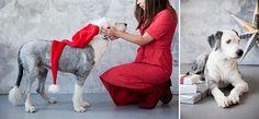 Kuvaidea joulukorttiin! Kuvaa lemmikki vasten kangasta, jossa on samaa sävyä kuin turkissa. Pari jouluista elementtiä kuvaan riittää! http://www.ifolor.fi/inspire_10_joulukortti_ideaa_joulu_aikuisten_kesken