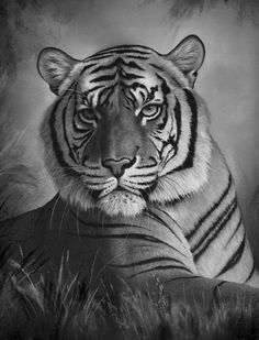 Find This Pin And More On Big Cats By Kathrine Riddle