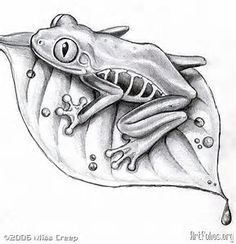 Image result for Tree Drawings in Pencil Frog