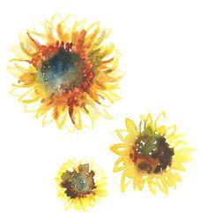 Para teñir un vestido de girasoles Sunflower_4