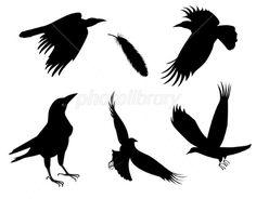 カラス 動物 鳥 イラスト素材