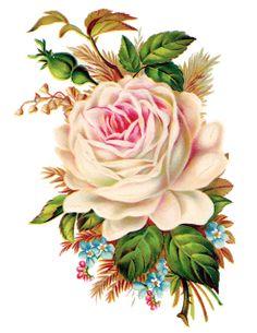 Rosas de Verônica: Vintage Roses - Rosas Vintage PNG