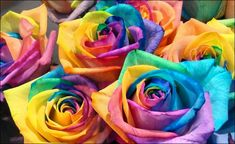 Rainbow Roses- split the stems and place each part into food coloring. The roses draw the color into the petals, creating the beautiful rainbow roses you see! Color Of The Week, All The Colors, Macaroni Art, Rainbow Roses, Rainbow Colors, One Rose, Crafts For Kids, Diy Crafts, Kids Diy