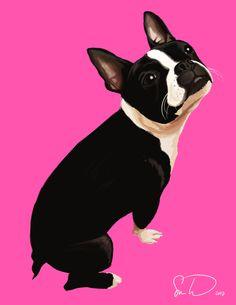 F Yeah, Boston Terriers : Photo