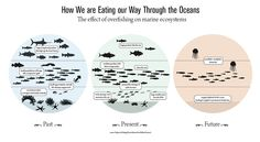 fish recipe i hope you find this instead stop eatting fishes! they are animals too OVERFISHING- Many marine… | Erin Red
