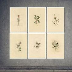 Set of 6 botanical prints - on sale 20% off!