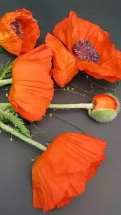Love the color of these poppies!