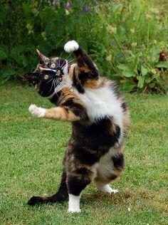 kočka co tancuje ja opitá!!!
