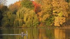 Image result for regents park in autumn