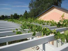 Belle terrasse avec vigne pour faire de l 39 ombre laube - Comment faire de l ombre sur une terrasse ...