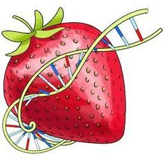 Extract DNA from Smashed Strawberries: Scientific American