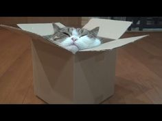 Check Out This Cat-In-The-Box  (Big Kitty, Small Box!) - http://www.kittydaily.com/check-out-this-cat-in-the-box-big-kitty-small-box/