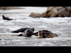 WWF Petteri Tolvanen –  Itämeri voi huonosti #Megastar - YouTube Youtube, Youtubers, Youtube Movies