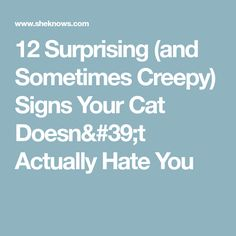32971b1c7667 12 Surprising (and Sometimes Creepy) Signs Your Cat Doesn't Actually Hate  You
