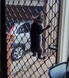 Plus habile que le chien, le chat escalade la barrière sans aucun problème