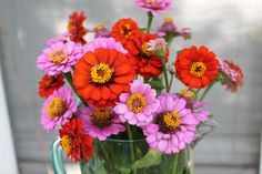 Playing Florist in the Garden with the Children - zinnia flowers