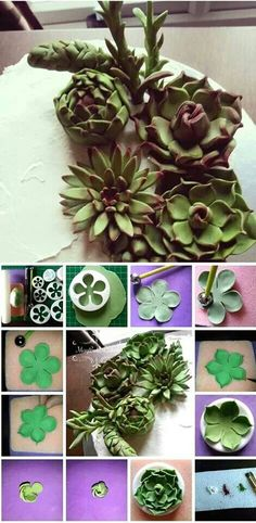 Succulents tutorial