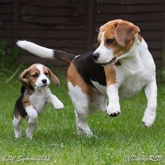 """""""Dogs are the leaders of the planet. If you see two life forms, one of them is making a poop and the other one's carrying it for him, who would you assume is in charge?"""" -- Anonymous"""