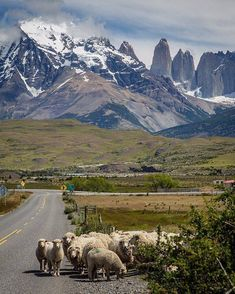Torres del Paine Torres Del Paine National Park, Nature Scenes, Places To Go, National Parks, Landscape, World, Photography, Travel, Berg