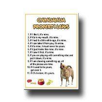 Chihuahua Property Laws Fridge Magnet No 1 $5.99